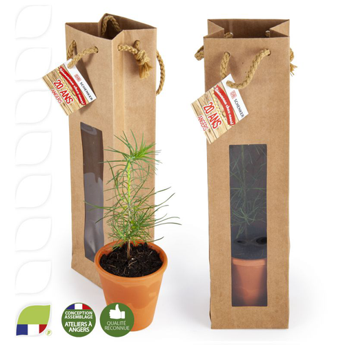 Petit plant de pin en pot terre et sac kraft brun