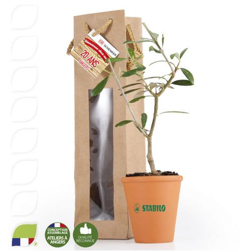 Plant d'olivier en pot terre et sac prestige kraft